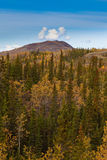 Yukon Gold - Fall in Yukon Territory, Canada Stock Image