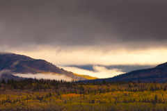Yukon Gold - Fall in Yukon Territory, Canada Royalty Free Stock Photography