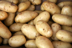 Yukon Gold Potato Stock Images