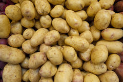 Yukon gold potatoes. In a pile at a farm stand can be used as a background Stock Image