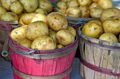 Yukon Gold potatoes in bushel baskets Royalty Free Stock Photos