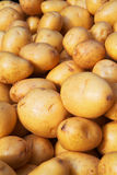 Yukon Gold Potatoes Vertical Stock Image