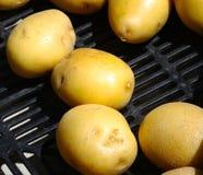 Yukon marknadsför guld- potatisar på bonde` s arkivbilder