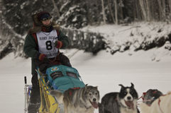 Yukon Quest - Jocelyne LeBlanc Royalty Free Stock Photo