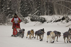 Yukon Quest - Lance Mackey Stock Photo