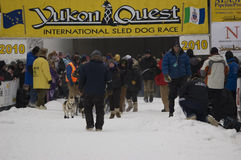 Yukon Quest - Start Gate. FAIRBANKS - Feb. 6, 2010 - A crowd begins to gather as Abbie West's team, the first out of the chute in this year's Yukon Quest sled Stock Photography