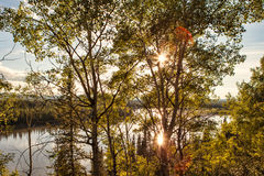 Yukon River Sunburst Arkivfoton