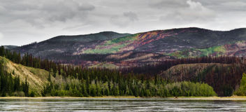 Yukon River valley after recent forest fire. Recently burnt boreal forest in the Yukon River valley, Yukon Territory, Canada Royalty Free Stock Image