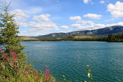 Yukon River, Whitehorse, Yukon, Canada Royalty Free Stock Photo