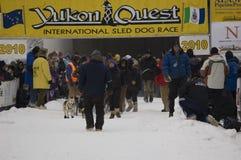 Yukon-Suche - stellen Sie Gatter an Stockfotografie