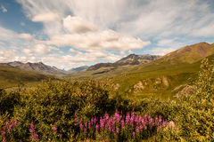 Yukon Summer Stock Photography
