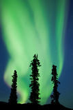 Yukon taiga spruce Northern Lights Aurora borealis Royalty Free Stock Image
