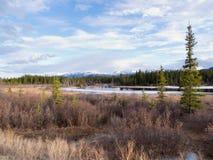 Yukon taiga wetland marsh spring thaw Canada. Boreal forest taiga wetland marsh spring thaw in Yukon Territory, Canada Stock Image