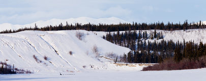 Yukon winter landscape and dogs pull musher sled Stock Images