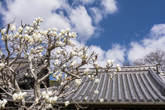 Yulan木兰和屋顶 免版税库存照片