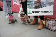 Yulin dog festival protestors Chinese New Year, year of the dog London, February 2017. Royalty Free Stock Images