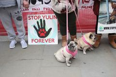 Yulin dog festival protestors Chinese New Year, year of the dog London, February 2017. Stock Photography