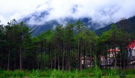 Yulong Snow mountain Foothills Royalty Free Stock Images