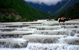 Yulong Snow mountain-white river. A yak Standing in the water Royalty Free Stock Image