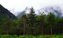 Yulong Snow mountain -Woods Stock Images