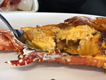 Yummy αστακός με τη σάλτσα uni στοκ εικόνα με δικαίωμα ελεύθερης χρήσης