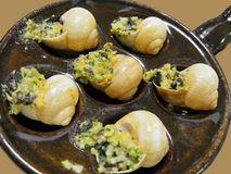 Yummy escargot Cu Stockfoto