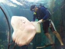 Yummy !!!. Feeding show in Phuket aquarium in Thailand Royalty Free Stock Photography