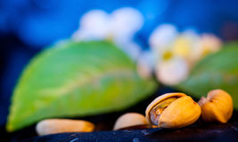 Yummy Pistachio Nuts Stock Image