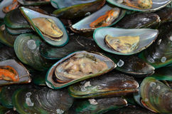 Yummy scalloped fat mussels. Yummy boiled scalloped fat mussels in shells Stock Photography