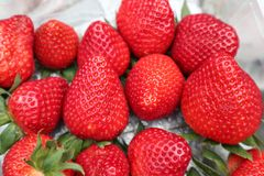 Yummy strawberry. Red strawberry from natural ,good for helth Royalty Free Stock Photo