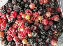 Yummy summer berries royalty free stock images