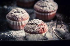 Yummy and sweet chocolate muffin with caster sugar Stock Photos