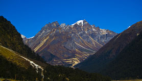 Yumthang valley Stock Image