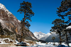 Yumthang Valley. Is a grazing pasture surrounded by the Himalayan Mountains in the North Sikkim district of Sikkim, India filled with thick snow in winter. It Stock Photo