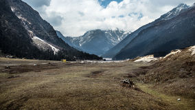 Yumthang Valley India Stock Image