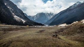 Yumthangvallei India stock afbeelding