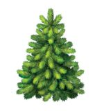 Yung绿色杉树。 圣诞树 库存图片