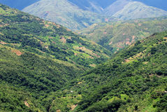 The Yungas, Bolivia Stock Image