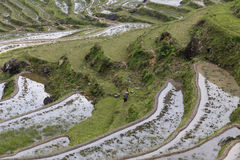 Yunhe terraces Royalty Free Stock Photography