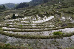 Yunhe terraces Stock Image