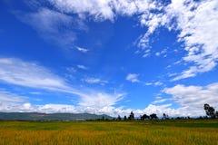Yunnan Δάλι της Κίνας Στοκ φωτογραφία με δικαίωμα ελεύθερης χρήσης