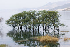 Yunnan, China Dali beautiful Erhai tree in water Stock Photos