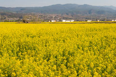 YUNNAN, CHINA - 21. MÄRZ 2015: Vergewaltigung-Blütenfeld bei Shaxi alt Lizenzfreies Stockbild