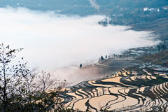 Yunnan, China, Yuanyangtitian, clouds around, the Royalty Free Stock Images
