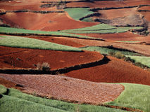 Yunnan dongchuan red field Stock Images