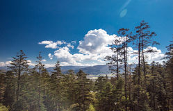 Yunnan forest. Alpine forest at an altitude of over 2,000 meters Stock Photo