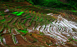 Yunnan Kina solnedgång Arkivfoton