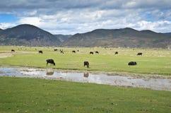 Yunnan krajobraz Fotografia Royalty Free