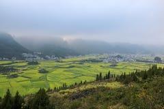 Yunnan-Landschaft des Rapssamenblumenfeldes Stockfotos