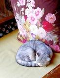 Yunnan Lijiang China Cat Kitten Deep Sleep Day Dreaming durmiente imagen de archivo libre de regalías